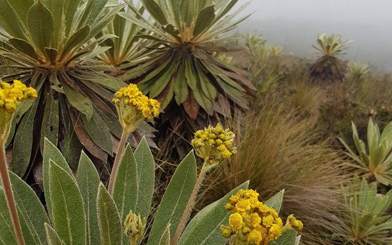 Boue, brouillard et bonne humeur à Matarredonda