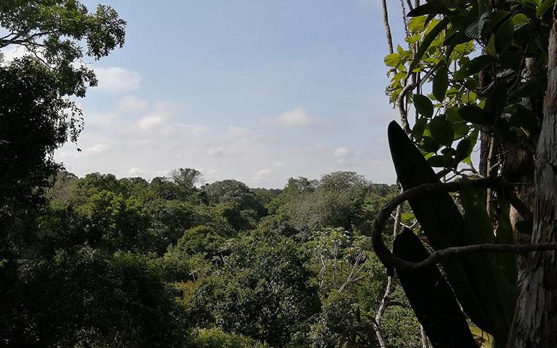 L'Amazonie, deuxième partie